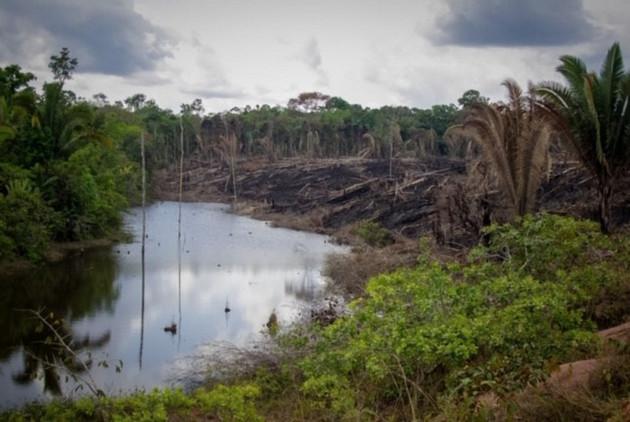 Los bosques primarios de los trópicos son ricos en biodiversidad y almacenamiento de carbono. Foto: Cortesía de Gustavo Faleiros/Infoamazonia
