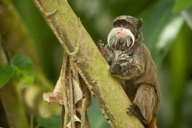 Los animales silvestres, al igual que la flora de los bosques almacenan miles de virus desconocidos por la ciencia. Foto: Servicio Forestal y de Fauna Silvestre de Perú