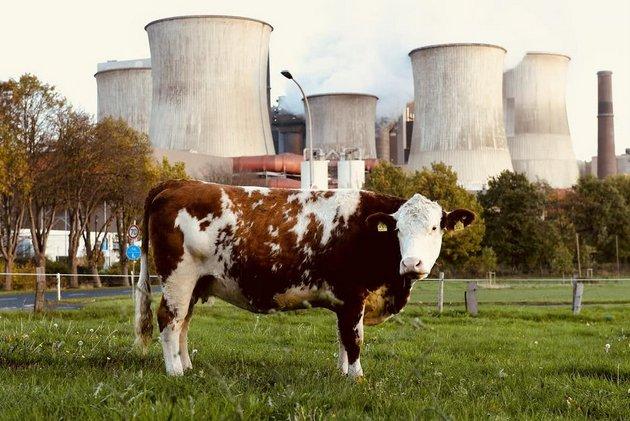 La agricultura y los combustibles fósiles son las principales causas del aumento de los niveles de metano. Foto: EPA