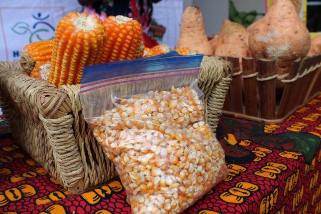 El maíz naranja con vitamina A proporciona un alimento altamente nutritivo que combate la desnutrición y que algunas empresas alimentarias lideradas por mujeres han comenzado a promover con distintas presentaciones en algunos países de África. Foto: Busani Bafana / IPS