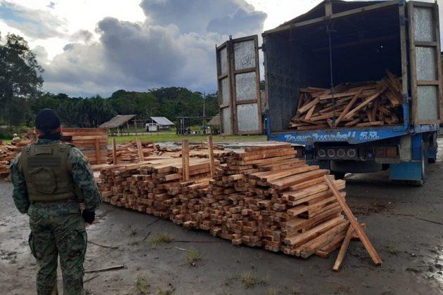 En un operativo en el que participaron Guardaparques del Yasuní, Fuerzas Armadas y Policía Ambiental, fue retenido un camión con 25 metros cúbicos de balsa en la parroquia Pompeya a mediados de junio 2020. Foto: MAE Orellana