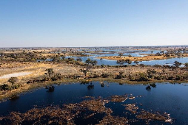 Vista parcial del delta del Okavango, el mayor del mundo donde un río desemboca en el interior del territorio y no en el mar. En este gran territorio en forma de abanico donde termina el río Okavango en Botswana, un país sin salida al mar, fue donde murieron entre marzo y junio entre 350 y 700 elefantes, según las diferentes versiones. Foto: Wikimedia