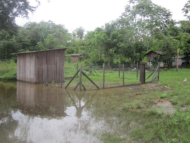 """Un gallinero de la aldea Miratu, del pueblo indígena juruna, que al igual que otras edificaciones quedó inundado cuando la empresa Norte Energía, propietaria de la central hidroeléctrica de Belo Monte, liberó un exceso de agua para el cauce de la Volta Grande del río Xingu. """"Hoy las compuertas controlan el caudal"""", y no los ciclos naturales del río, explica la lideresa Bel Juruna. Foto: Mario Osava/IPS"""