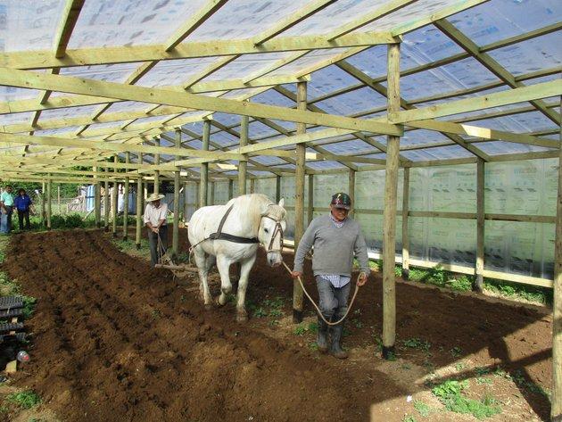 Con el apoyo de un caballo, campesinos aran la tierra de un invernadero comunitario construido para beneficio colectivo en una de las comunidades de San Nicolás, un municipio rural de la región de Ñuble, en el sur de Chile. Foto: PNUD Chile