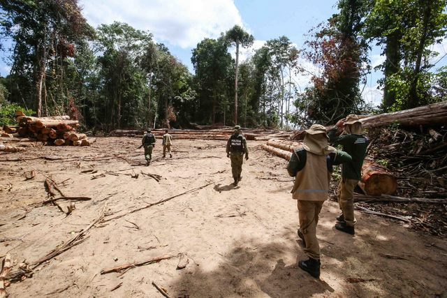 Un operativo militar en Moju, en la Amazonia Oriental, incautó 175 metros cúbicos de madera extraída ilegalmente en una propiedad de 1200 hectáreas. Es una actividad que contribuye a la deforestación amazónica, que creció desde 2015, especialmente en los dos últimos años, durante el gobierno de Jair Bolsonaro. Su ministro de Medio Ambiente, Ricardo Salles, defiende los madereros y mineros, aunque sea ilegal. Fotos: Alex Ribeiro/Ag.Pará-Fotos Públicas