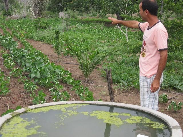 El campesino Abel Manto, logro cultivar en su finca, en el interior del estado de Bahia, en la región del Nordeste de Brasil, hortalizas y frutales, en un vergel en la ecorregión del Semiárido, gracias al agua de lluvia almacenada en varias cisternas. Sin riachuelos cercanos, su producción durante todo el año depende del acopio de lluvia. Foto: Mario Osava / IPS