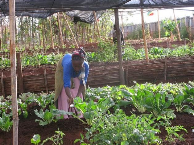 La escasez de tierra en Etiopía es un tema crítico para los pequeños agricultores que son 80 por ciento de la población. Crédito: Isaías Esipisu/IPS