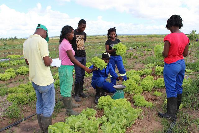 Estudiantes del Instituto Medio Agrario de Inhambane analizan la evolución de una variedad de lechuga en la Estación Agraria de Umbeluzi, Mozambique. Crédito: Amos Zacarias/IPS