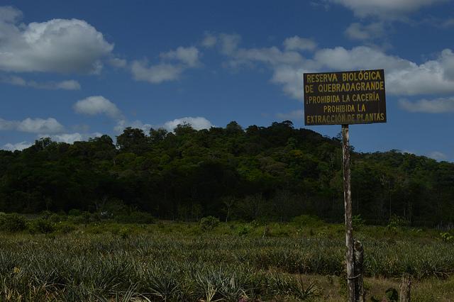 En Quebrada Grande, el Instituto de Desarrollo Agrario destinó a la conservación forestal 119 hectáreas, que la asociación de mujeres cuida desde hace una década. Crédito: Diego Arguedas Ortiz/IPS