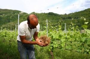 """Un agricultor muestra un pedazo de tierra que """"sencillamente no tiene vida"""". Crédito: Silvia Giannelli/IPS."""