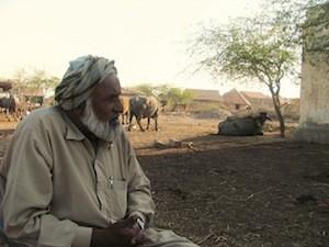 Saleem Nodae asingó cuatro búfalos para sus cuatro hijas. Crédito: Athar Parvaiz/IPS.