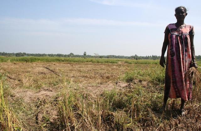Una mujer parada en su terreno desecado en el oriental distrito de Batticaloa, una de las regiones arroceras más grandes de Sri Lanka, que sufrió el impacto de una sequía de 11 meses. Crédito: Amantha Perera/IPS.