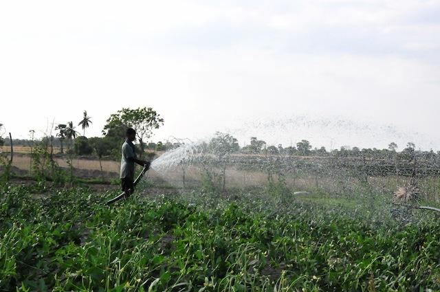 Un hombre usa una bomba industrial en la zona de Karadiyanaru, en el oriental distrito de Batticaloa, en Sri Lanka. Los especialistas alertan sobre el uso de poderosas bombas de agua en esa región árida, que somete a la napa freática a una presión excesiva. Crédito: Amantha Perera/IPS.