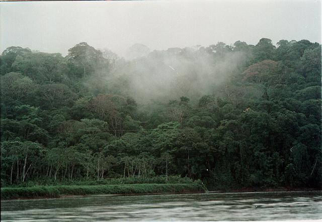 Bosque nublado de Costa Rica. Frenar la deforestación en América Latina es esencial para mitigar las emisiones de carbono. Crédito: Germán Miranda/IPS