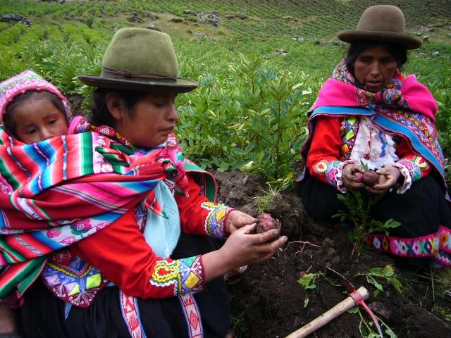 Regina Illamarca y Natividad Pilco, dos de las campesinas que preservan la biodiversidad de la papa en Huama, en el departamento de Cusco, en los Andes peruanos, y cuyos cultivos comienzan a alterarse por el recalentamiento planetario. Crédito: Milagros Salazar /IPS