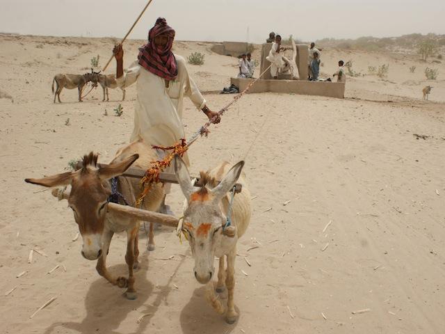 En la árida región de Tharparkar, los habitantes sacan agua de las profundidades de la tierra mediante camellos y burros. Crédito: Irfan Ahmed/IPS