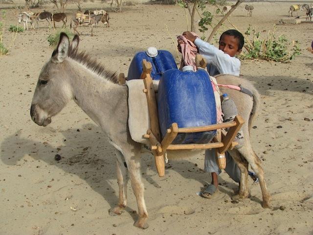 Los niños ayudan a sus familias a transportar los pesados recipientes de agua. Crédito: Irfan Ahmed/IPS
