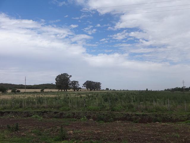 Tierra deforestada en un área rural de la central provincia de Córdoba, en Argentina, como consecuencia del cultivo de la soja transgénica. Crédito: Fabiana Frayssinet/IPS