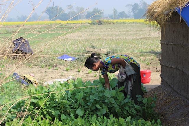 Kalpana Gurung revisa su huerta y espera cosechar verduras de hoja verde en primavera para alimentar a su familia. Está amamantando y teme no poder darle suficiente alimento a su bebé de nueve meses. Crédito: Mallika Aryal/IPS.