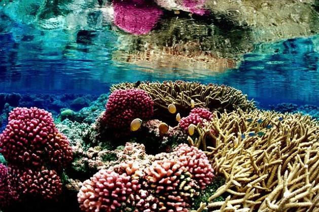 Ecosistema de arrecife coralino en el Refugio Nacional de Vida Silvestre del Atolón de Palmyra, Estados Unidos. Crédito: Jim Maragos/Servicio de Pesca y Vida Silvestre de Estados Unidos