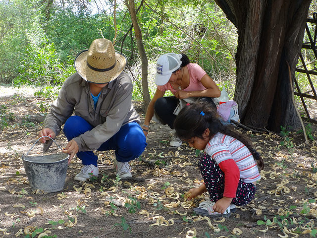 Tres generaciones de mujeres rurales argentinas recolectan vainas de algarroba en el pueblo de San Gerónimo, en la noroccidental provincia de Santiago del Estero. Las mujeres campesinas latinoamericanas producen la mitad de los alimentos de la región. Crédito: Fabiana Frayssinet/IPS