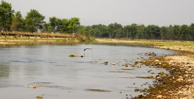El Parque Nacional de Chitwan, en Nepal, sobresale en Asia por su conservación de la vida silvestre. Crédito: Naresh Newar / IPS
