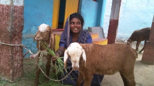 Bhagyamma, una mujer dalit que en el pasado fue una esclava del templo, encontró la autosuficiencia económica con la crianza de cabras en la aldea de Nagenhalli, en el estado indio de Karnataka. Crédito: Stella Paul / IPS