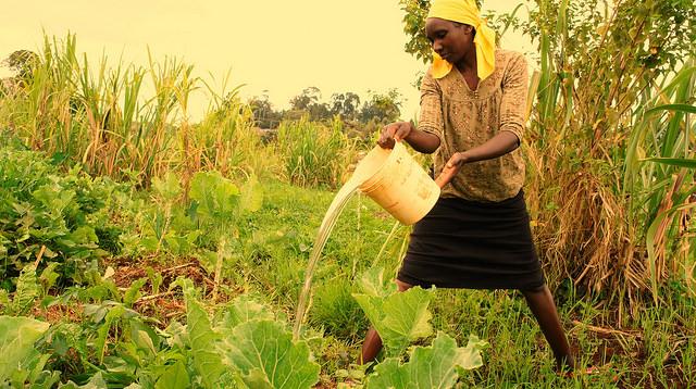 Esta mujer, habitante de Ngangarithi, riega sus cultivos con agua de los humedales. Crédito: Miriam Gathigah/IPS