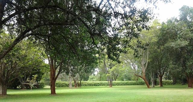 La comunidad cuida minuciosamente las afueras de los bosques kaya, que también son el cementerio de sus ancestros. Crédito: Miriam Gathigah/IPS