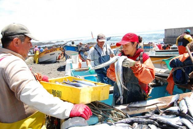 Pescadores artesanales en la caleta de Duao, en la región chilena de Maule. La degradación de los mares y océanos podría perjudicar a los más de dos millones de pescadores artesanales o de pequeña escala de América Latina. Crédito: Marianela Jarroud/IPS