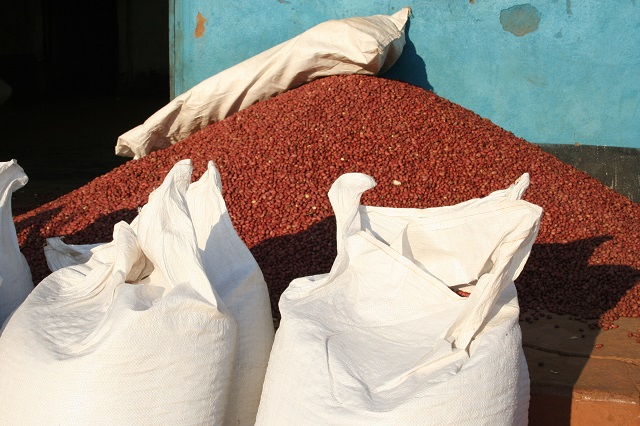 El alto nivel de las aflatoxinas en el maní de Malawi afectó las exportaciones de ese país. Crédito: Busani Bafana / IPS