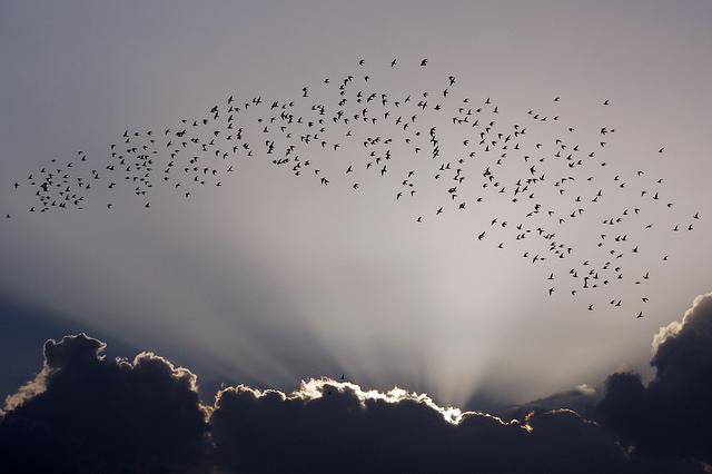 Una bandada de aves sobrevuela un barrio costero de La Habana, en Cuba.El Corredor Biológico en el Caribe es una zona de tránsito de aves migratorias, cuya conservación exige acciones multilaterales en tiempos de recalentamiento planetario. Crédito: Jorge Luis Baños/IPS