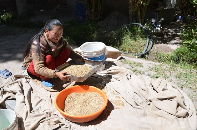 En Ladakh, India, el alto desempleo no les deja muchas opciones a las mujeres, que en su mayoría tienen poca educación formal. Crédito: Neeta Lal/IPS
