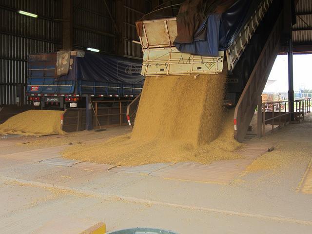 Camiones descargan la soja en el Complejo Agroindustrial Angostura (Caiasa). Aquí comienza el recorrido de la soja dentro de la planta industrial, hasta transformar la oleaginosa en harina y aceite que son exportados en barcazas por el río Paraguay, desde el parque industrial de Villeta, en Paraguay, en el Cono Sur americano. Crédito: Mario Osava/IPS