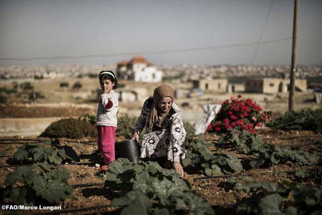 La escasez hídrica es uno de los problemas de la inseguridad alimentaria más acuciantes a los que debe hacer frente Medio Oriente y África del norte. Se pronostica que la disponibilidad de agua dulce disminuya 50 por ciento para 2050. Crédito: FAO / Marco Longari.