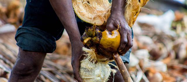 En Mozambique, la inversión ambiental genera beneficios para los más pobres. Las comunidades locales se esfuerzan por proteger su ecosistema para preservar sus ingresos tras un enfermedad que devastó las plantaciones de coco. Crédito: PNUMA.
