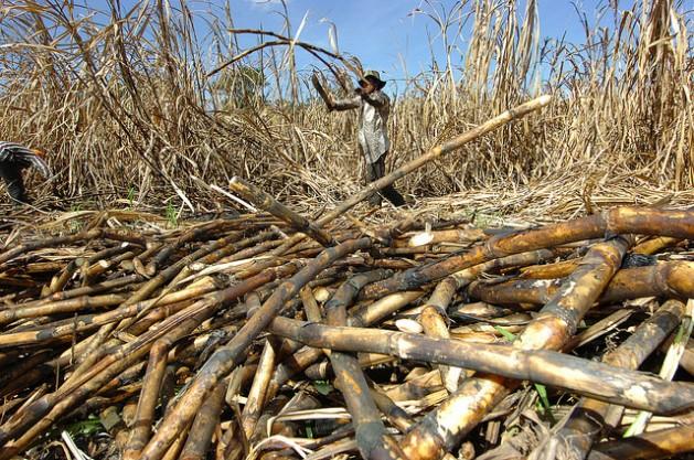 Un bracero corta caña en la Central Izalco, un ingenio azucarero situado en el municipio de Santigo Nonualco, en el central departamento de La Paz, en El Salvador. Activistas, campesinos y líderes comunitarios acusan a la agroindustria del azúcar de que sus plantaciones irrespetan el ambiente y afectan los recursos naturales y las comunidades. Crédito: Francisco Campos/IPS