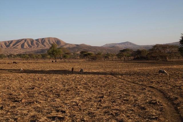 La sequía asociada al fenómeno de El Niño afectó severamente a la comunidad Arsi, en Etiopía. Crédito: Charlotte Cans/OCHA.