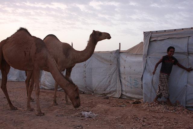 Con pocas oportunidades de esparcimiento, este niño yemení se divierte con un grupo de camellos. Crédito: James Jeffrey / IPS