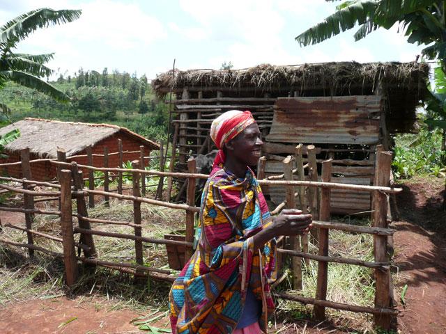 En Burundi, un proyecto de ganadería de propiedad comunitaria contribuyó a generar solidaridad y reducir el conflicto entre aldeanos, a pesar de la violenta guerra civil que azotaba al país. Crédito: Anna Manikowska Di Giovanni