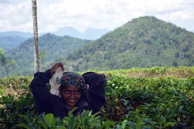 Kamakandalagi Leelavathi cosecha hojas de té en Kahawatte, Sri Lanka. Ella es uno de los centenares de agricultores que evitan los herbicidas y otros productos químicos. Crédito: Stella Paul / IPS