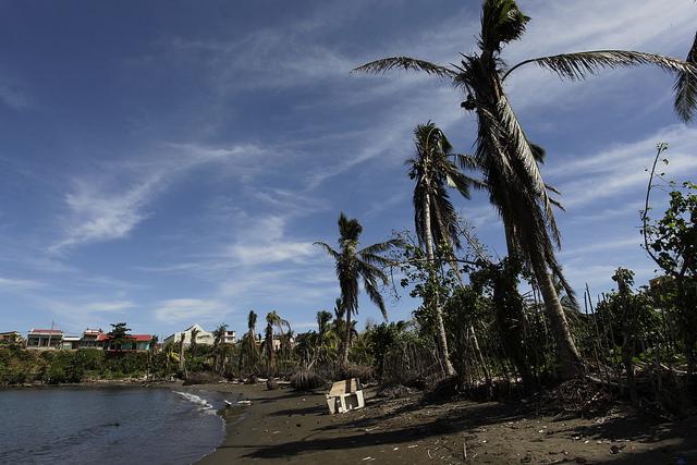 Una playa del litoral de la ciudad de Baracoa, con los cocoteros dañados por los efectos del huracán Matthew, lo que es preocupante para este municipio del oriente de Cuba, que tiene en el coco uno de sus principales rubros agrícolas. Crédito: Jorge Luis Baños/IPS