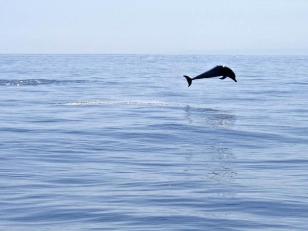 Los océanos concentran 80 por ciento de la biodiversidad del planeta y constituyen el mayor ecosistema de la Tierra. Crédito: Martine Perret/UN Photo.
