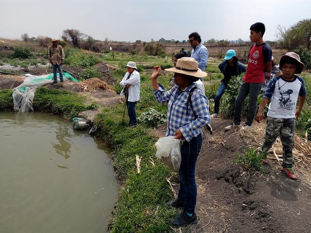 María Aparicio, en primer plano, alimenta las tilapias del estanque que su asociación construyó gracias al financiamiento y la capacitación brindada por el PESA, a una asociación de pequeños agricultores en Santa Ana Coatepec, en el sureño estado mexicano de Puebla. Crédito: Emilio Godoy/IPS