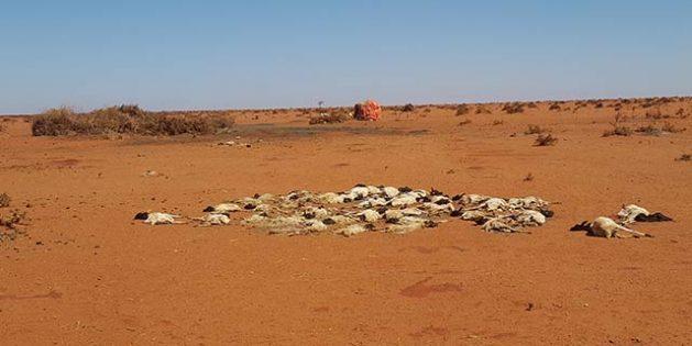 La sequía en curso en el Cuerno de África es generalizada, lo que provoca una crisis humanitaria regional. Crédito: FAO