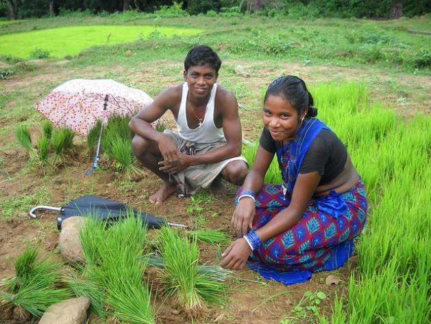 La consolidación de los derechos de tenencia de las mujeres sobre la tierra genera diversos resultados positivos para ellas y sus familias, incluida la capacidad de resistencia a los choques climáticos, la productividad económica, la seguridad alimentaria, la salud y la educación. En la imagen, una mujer tribal trabaja junto a su esposo plantando arroz en la provincia de Rayagada, India. Crédito: Manipadma Jena / IPS