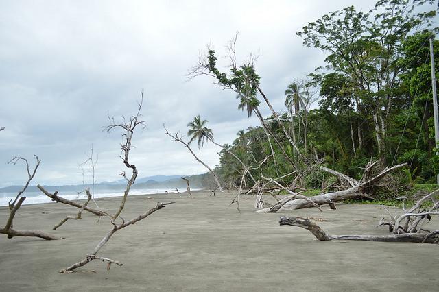 Playa de Puerto Vargas, en la provincia de Limón, en el sur del Caribe de Costa Rica. La zona es altamente vulnerable a la erosión costera y en ella se han perdido decenas de metros de playa en los últimos años. Crédito: Diego Arguedas Ortiz/IPS