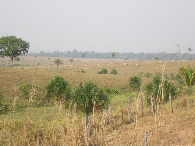 La deforestación por la expansión de la ganadería domina el paisaje en las cercanías de Alta Floresta, la ciudad que es una puerta suroriental de la Amazonia brasileña y conocida también como un centro de ecoturismo de pesca y observación de pájaros. Crédito: Mario Osava/IPS