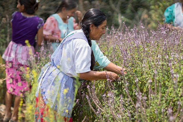 En algunos países latinoamericanos, la legislación establece que las mujeres no pueden acceder a la herencia y tenencia de las tierras. Esto se considera una legislación discriminatoria. Crédito: ONU Mujeres