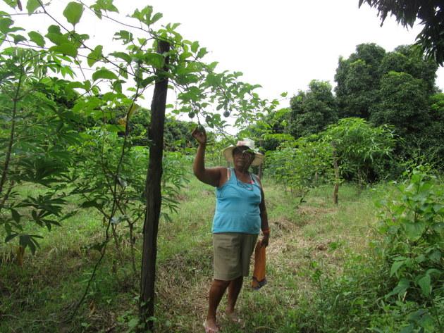 Escolástica Juárez, una agricultora de 59 años, en la parcela familiar donde cultiva en forma orgánica frutales y hortalizas, en el caserío de Chapica, en la provincia de Morropón, en el costero y norteño departamento de Piura, en Perú. Ella ha contribuido a impulsar la alimentación saludable en la escuela local. Crédito: Cortesía de Sabina Córdova